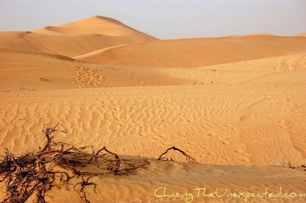 desert safari in Abu Dhabi