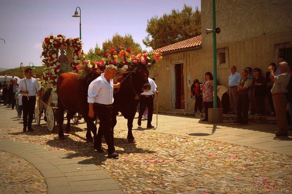 Bulls, horses and roses to celebrate Saint Catherine of Alexandria in Sardinia