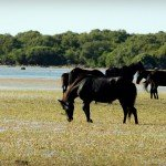 Video: In Parco della Giara, where horses forgot to keep up with evolution