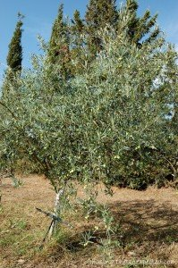Sardinia holidays at Agriturismo Archelao