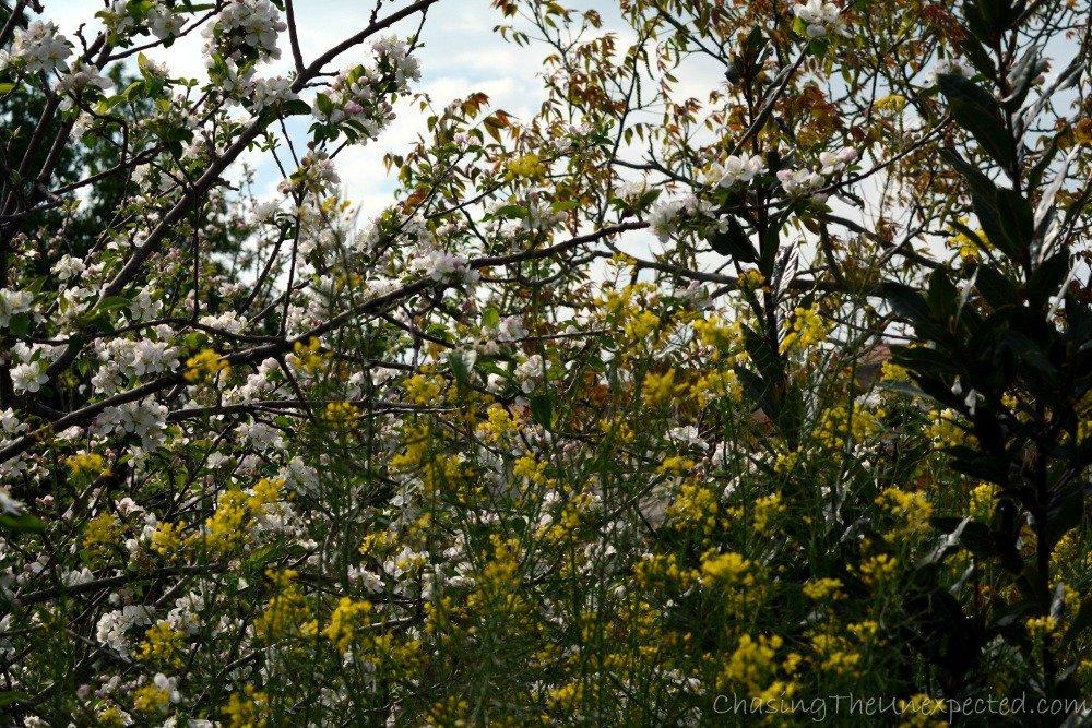More local flora.
