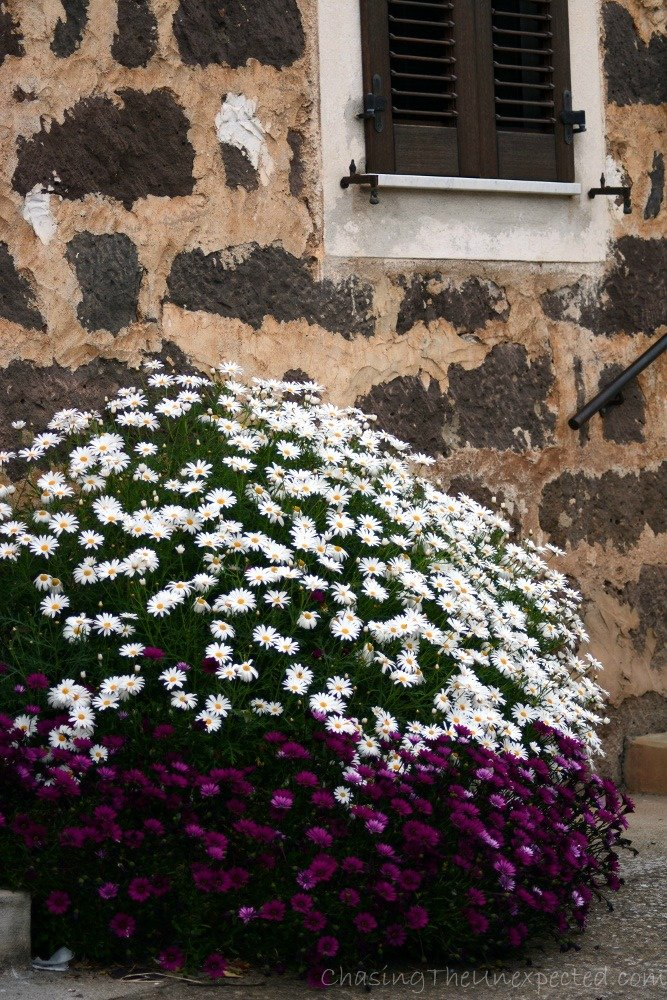 Flowers never missing outside Sardinian houses.