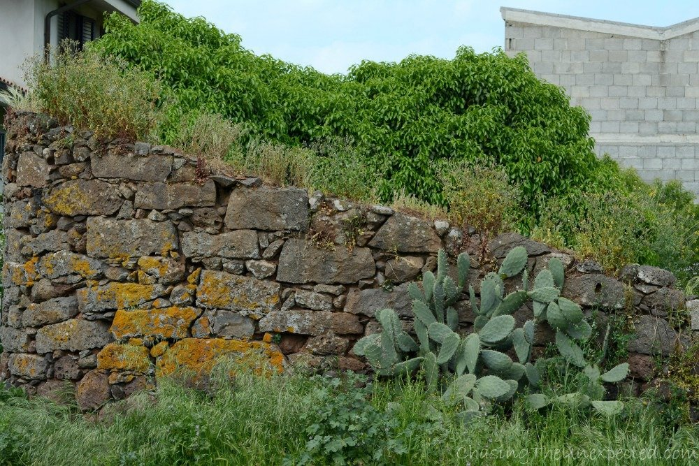 Typical Sardinian stone wall used in the countryside with the ever-present cactus.