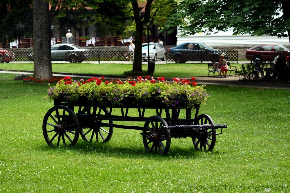 Old cart filled with flowers