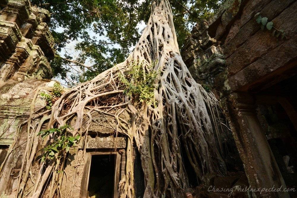 "Nature takes over at Ta Prohm ""Jungle Temple"""