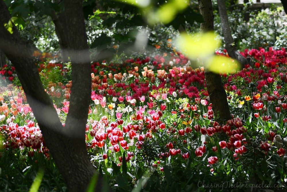 iranian garden tehran