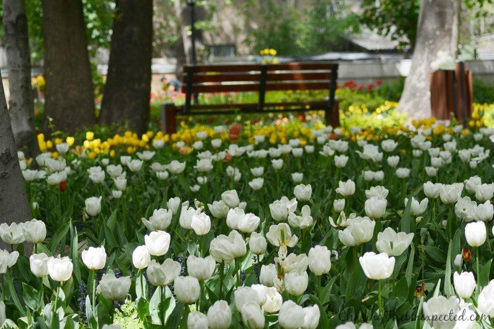 green tehran iranian garden