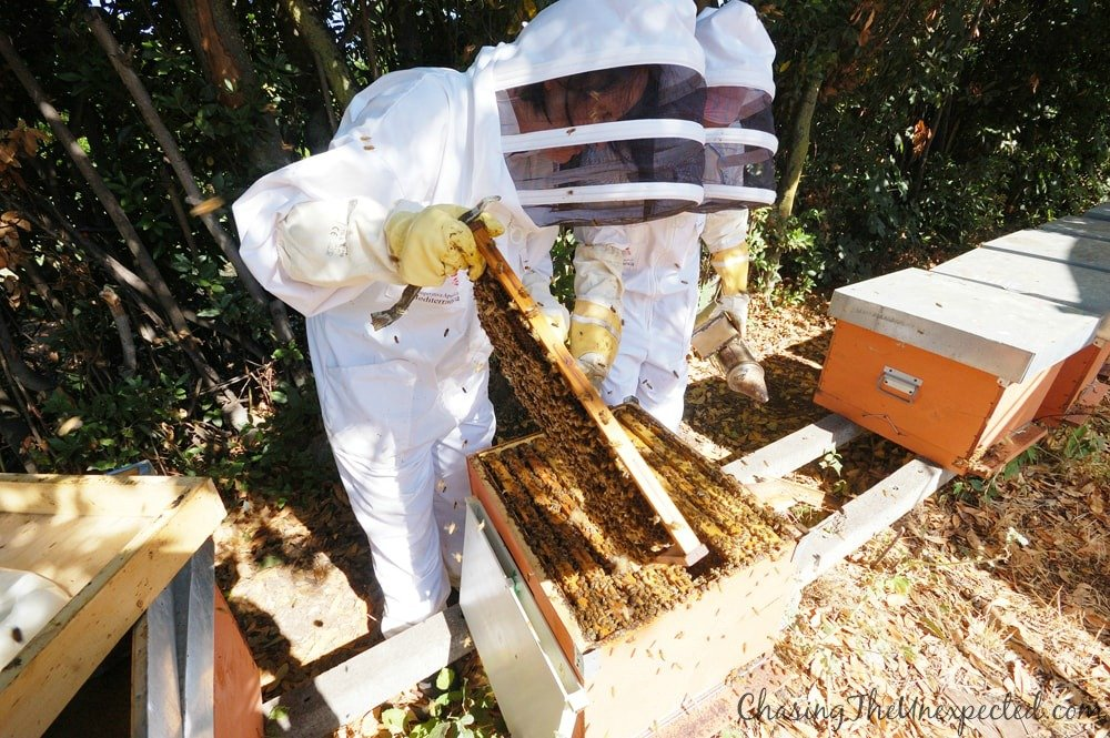 sardinian honey