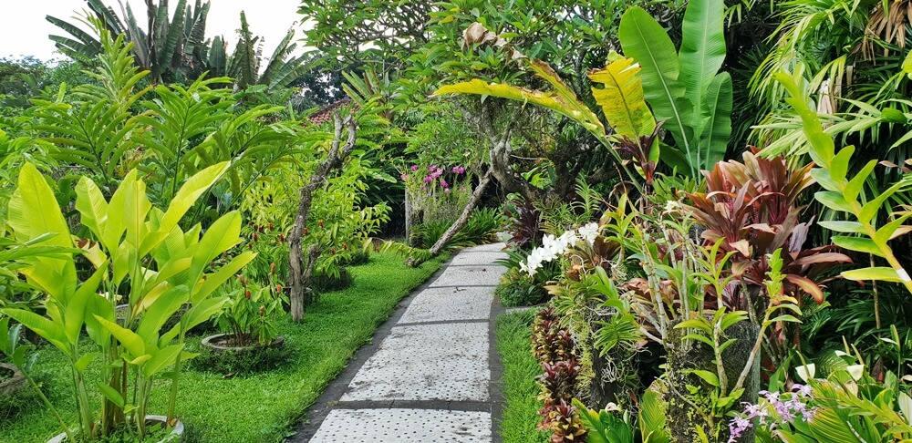 Image: Bali Orchid Garden in Sanur