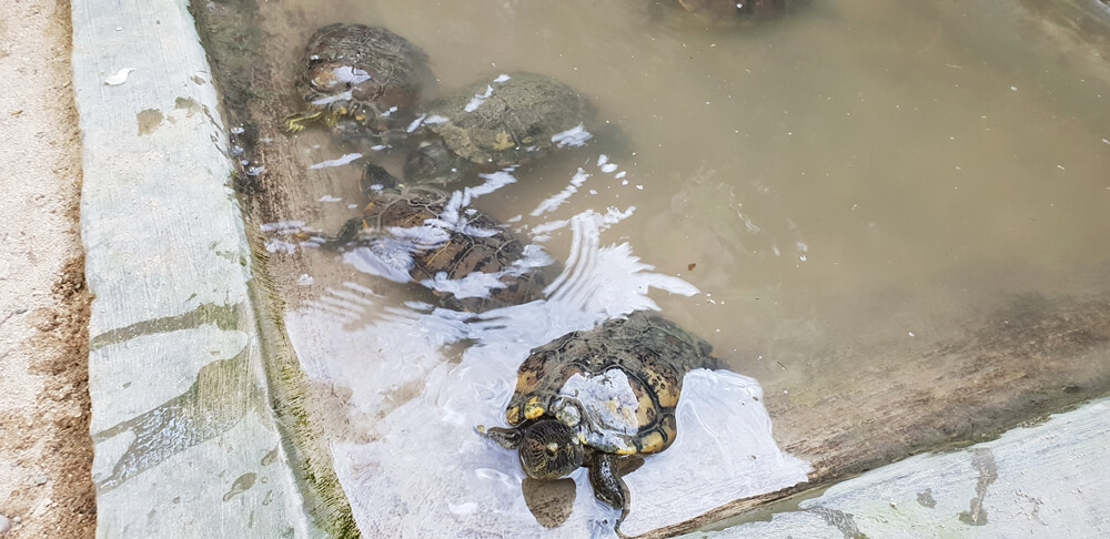 Image: Turtle Conservation and Education Center in Sanur