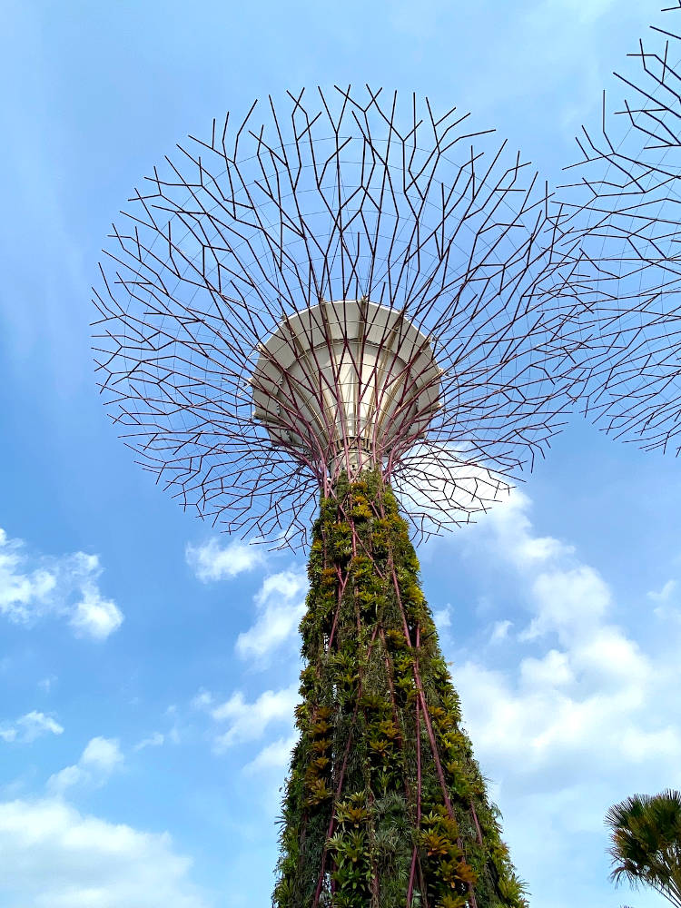 Image: Gardens By The Bay in Singapore