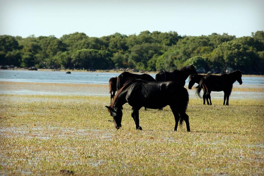 horses giara park sardinia